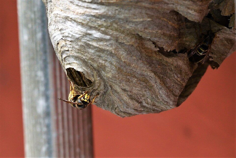 Wasp Nest hanging from a building that had been treated by our redditch pest control team